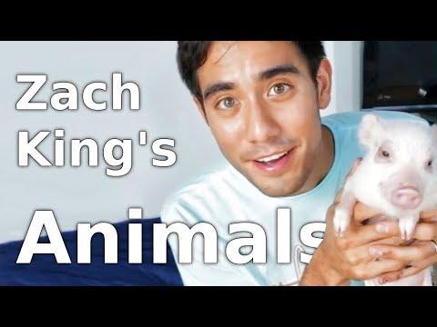 28 best Zach King Animals Magic Tricks - YouTube