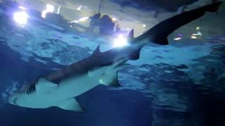 Смотреть видео Московский Океанариум - Москвариум (Aquarium Moscow) Косатки Акулы Дельфины в Москве онлайн
