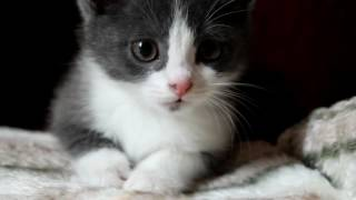 Котёнок Мурка (приют Домик, Волгоград)