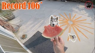 How My Siberian Husky Coped During A California HEAT WAVE!! SKUNK!