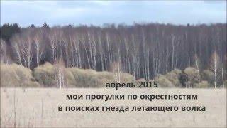Апрель 2015 в поисках гнезда ястреба