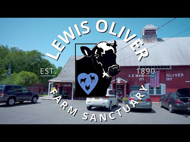 Welcome to LEWIS OLIVER FARM SANCTUARY - Farm Animal Sanctuary in Northport, NY