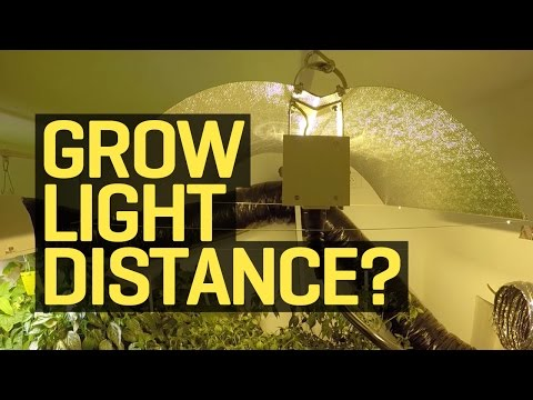 How Far Should My Growlight Be From My Plants?