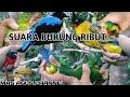 SUARA BURUNG RIBUT SUDAH TERBUKTI HASILNYA