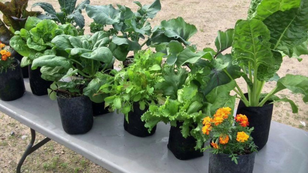 Incredible Results Growing Vegetables In 1 Gallon Root