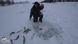 Рыбалка на Хариуса Отличный результат