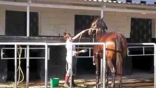 Лошади и Верховая езда на Кипре(Кипр и верховая езда от http://gloriaproperties.eu/ спецпредложения и цены для наездников любого уровня, организация..., 2015-03-08T16:21:28.000Z)