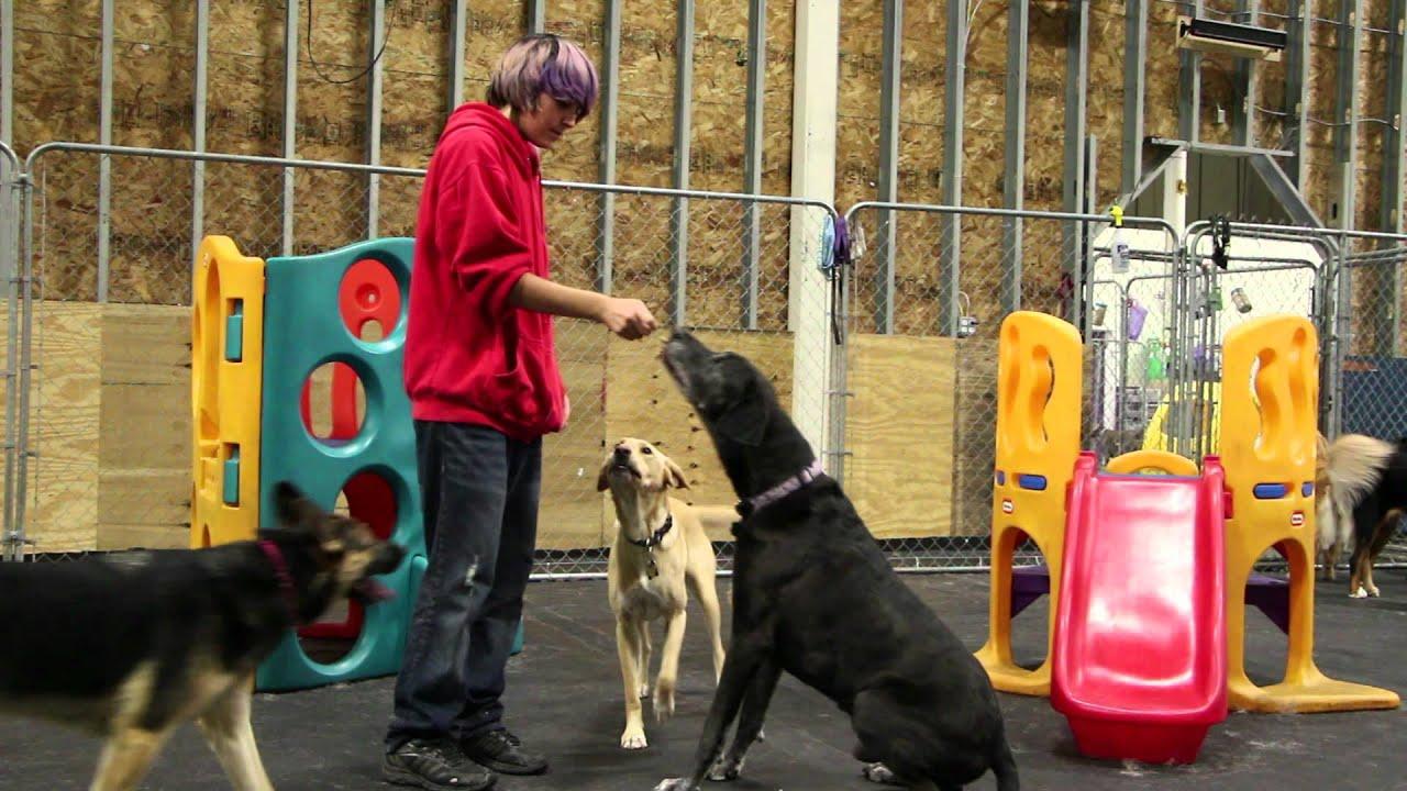Happy Tails Doggy Daycare, Inc. - YouTube - photo#27