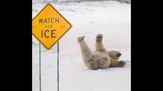 HILARIOUS Animals vs ICE and Slippery Surface