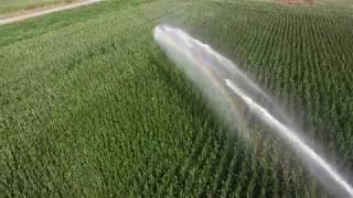 irrigation Nelson Gun 365 gallons a minute on Silage Corn Rosedale BC