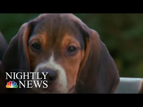 At-Home Dog DNA Tests Spark Controversy | NBC Nightly News