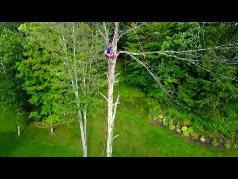 Tree cutting Milton Vermont Part 1