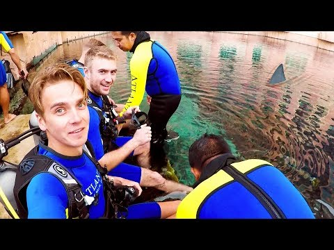 Download Youtube: DIVING WITH SHARKS!