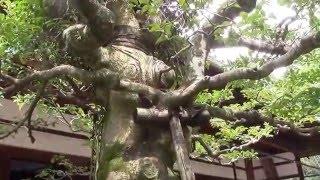 ★5感動した京都古寺ベスト百選ー日本庭園の傑作『桂春院』(妙心寺内)は苔庭の傑作、幽玄美のスポット