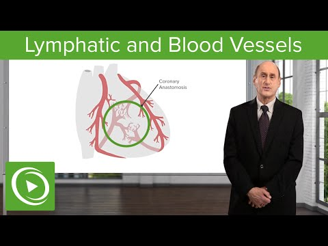 Lymphatic and Blood Vessels – Vascular Medicine | Lecturio