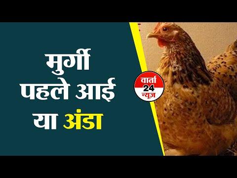 पहले मुर्गी आई या अंडा: वैज्ञानिकों ने खोजा जवाब