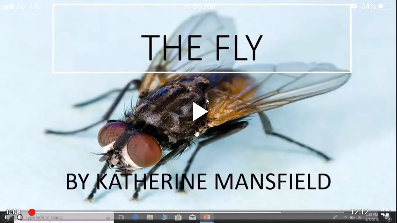 the fly by katherine mansfield questions