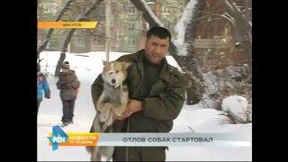 Отлов бездомных собак начался в Иркутске