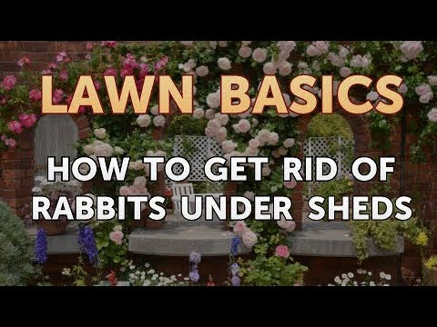 How to Get Rid of Rabbits Under Sheds - YouTube