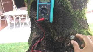 Energía de los árboles , como sacarla y porque funciona