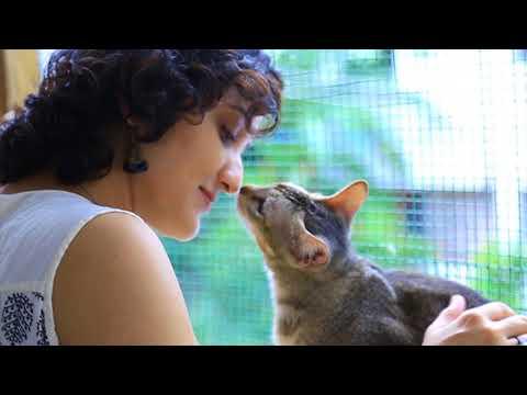 Animal Communication   Avaesa