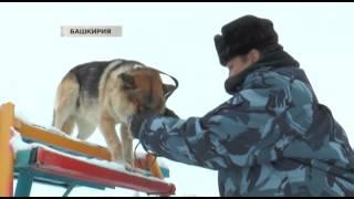 В Башкирии кинолог скрестил волчицу и пса(, 2014-02-24T03:58:59.000Z)