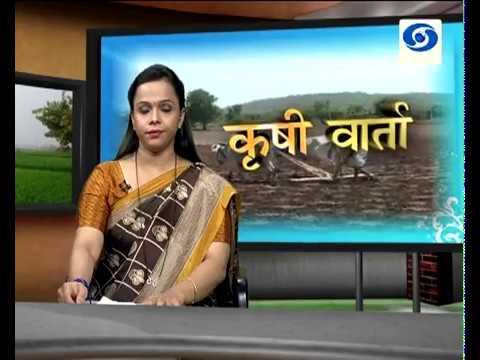 Krishivarta Bajarbhav - 30 May 2018 - कृषीवार्ता बाजारभाव