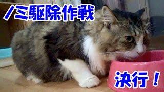 Boss Cat finaly got flea treatment!