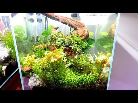 CYCLING YOUR AQUARIUM AND WHEN TO ADD PLANTS?
