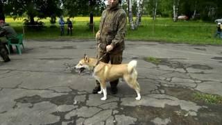 Выставка охотничьих собак 2017