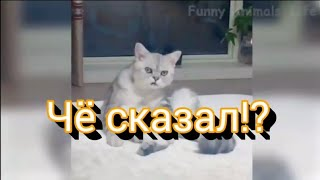 Смешные картинки котов (видео делала сама)