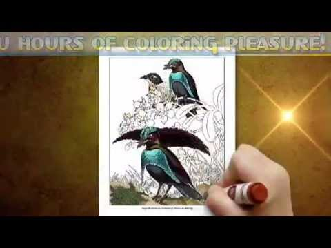Bird Coloring Book - Birds Of Paradise Coloring Pages For Adults- Volume 2  - YouTube