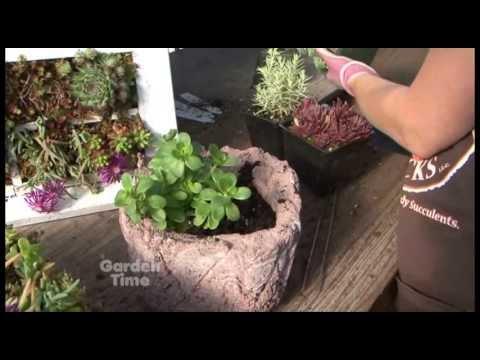 Planting Sedums