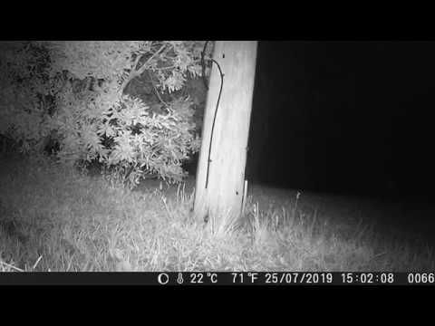 Backyard Animal Homes (Be a Backyard Detective!)
