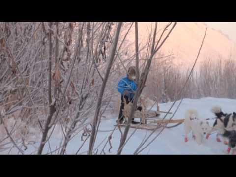 ARCTIC TRAVEL. Dog sledding in Siberia.mpg