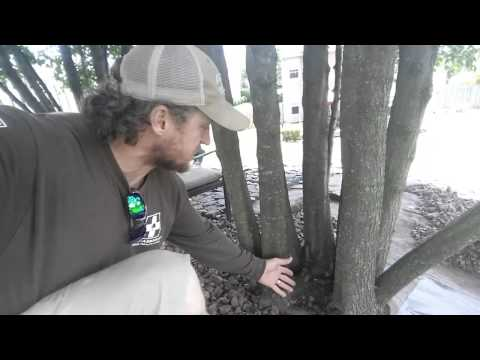 How to stop a tree stump from growing back