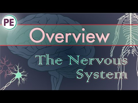 The Nervous System: Intro / Overview