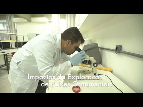 Impactos da exploração de espécies de peixes ornamentais no Alto Solimões