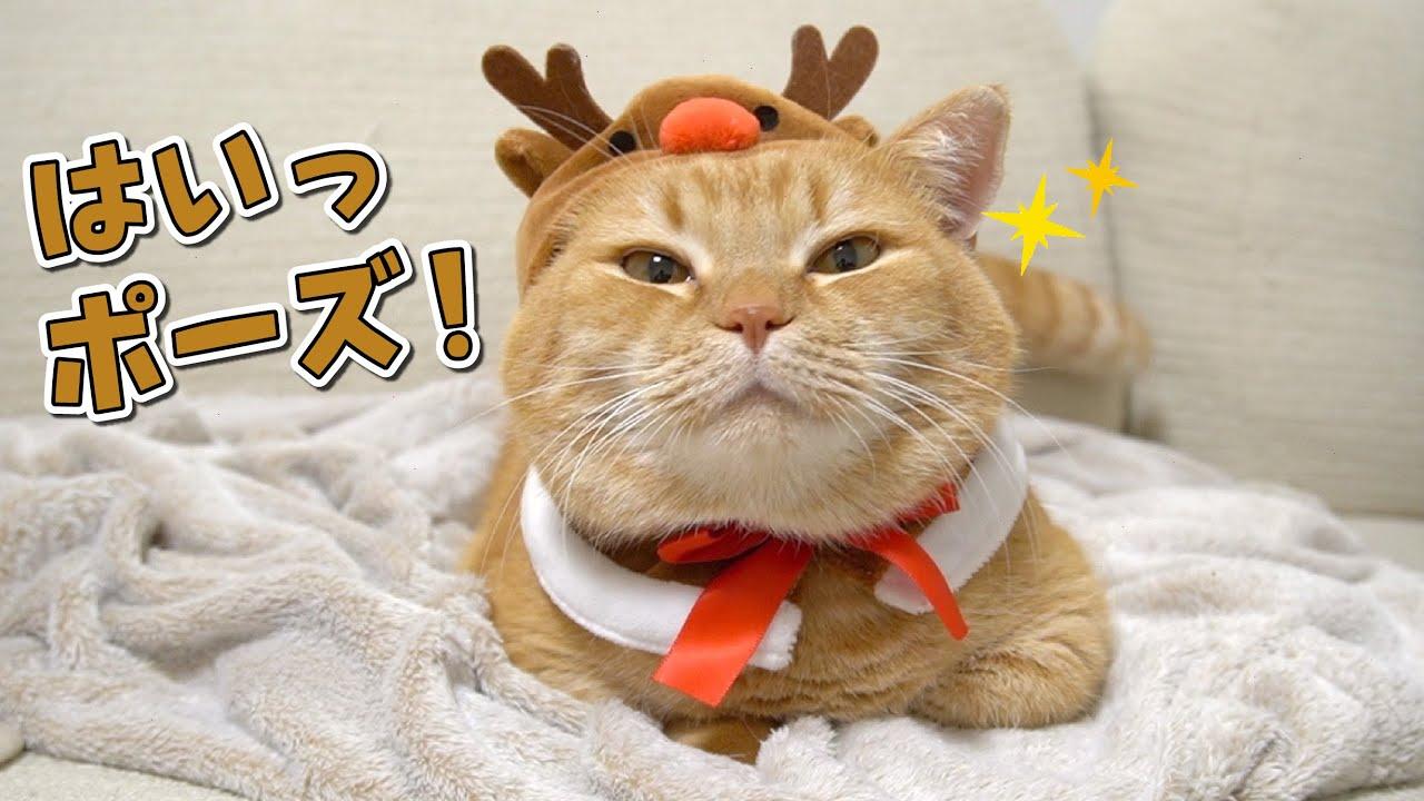我が家のモデル猫さん!マイペースな撮影の裏側が可愛いんです!