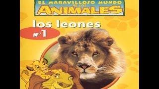 El maravilloso mundo de los animales de disney , los leones ♥.