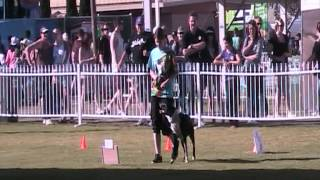 Buzz Rally Obedience Perth Royal Show 2012