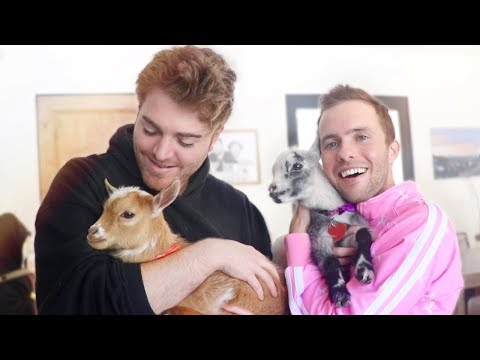 Meet Our Goats!