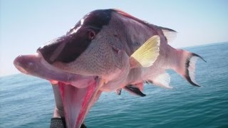 Spearfishing with the Spearheads Episode 8... The Beard.