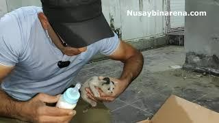 Nusaybin'de Gazeteci kedi yavrularına mamayla süt vererek açlıktan kurtardı