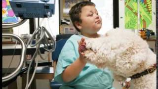 Tell Me a Story: Therapy Dogs Bring Smiles to Kids at Cincinnati Children
