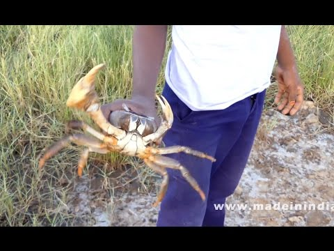 Fresh Crab Meat Omelette Making | CAUGHT AND COOK |  Yammy Sea Food Recipes – Village Food Factory