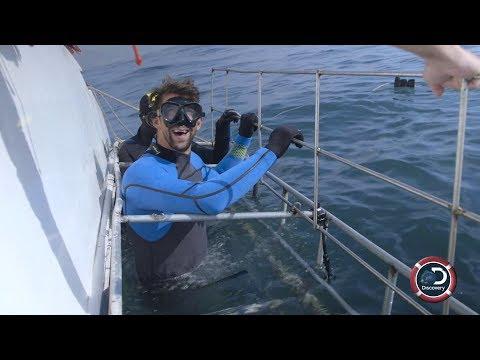 Michael Phelps Close Encounter | Shark Week