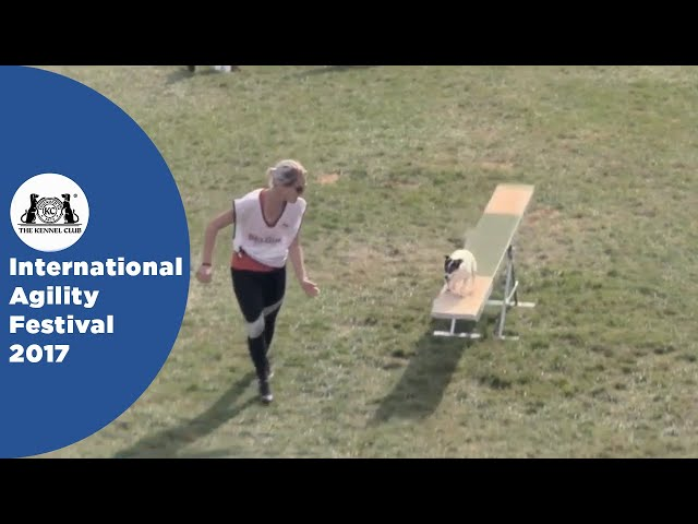 Nations Cup Final Small - Part 1 | International Agility Festival 2017