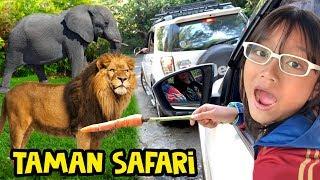 Pixel Liburan ke Taman Safari Indonesia Ketemu Hewan Buas | Wisata Cisarua Puncak