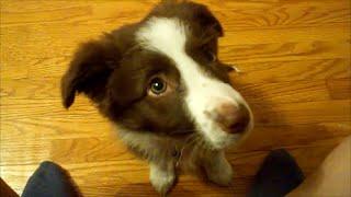 多くの犬種の中でも1,2を争う頭の良さ、そして身体能力の高さで有名なボ...